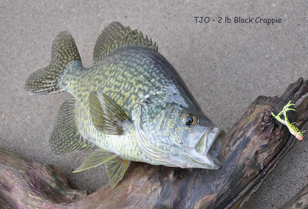Fish Replica Taxidermy with Tim Overbaugh - The Itinerant Angler